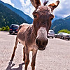 Donkey, the Parking Lot Attendant  http://sillymonkeyphoto.com/2010/09/01/donkey-the-parking-lot-attendant/