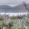 Golden Gate Bridge Flowers