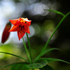 """Gray's Lily<br /> <br />  <a href=""""http://sillymonkeyphoto.com"""">http://sillymonkeyphoto.com</a>"""